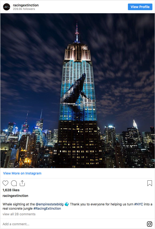 Screengrab of whale sighting at the ESB